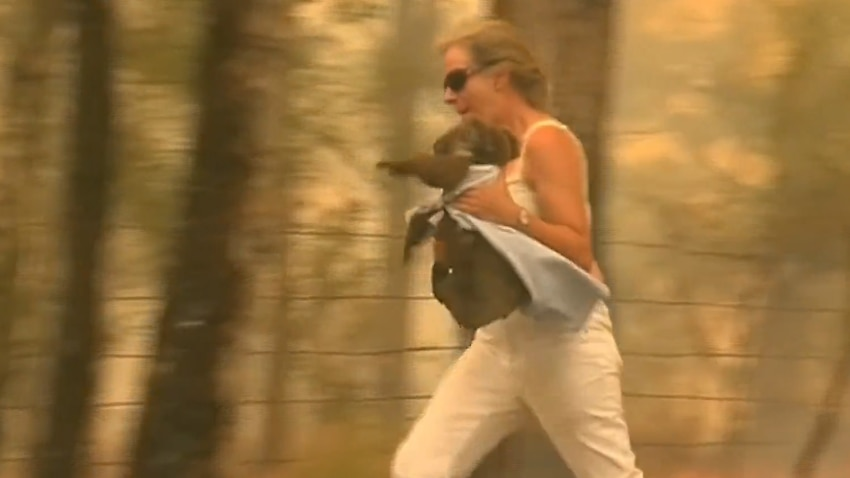 Woman who saved koala from bushfire with her own shirt hailed as 'hero'