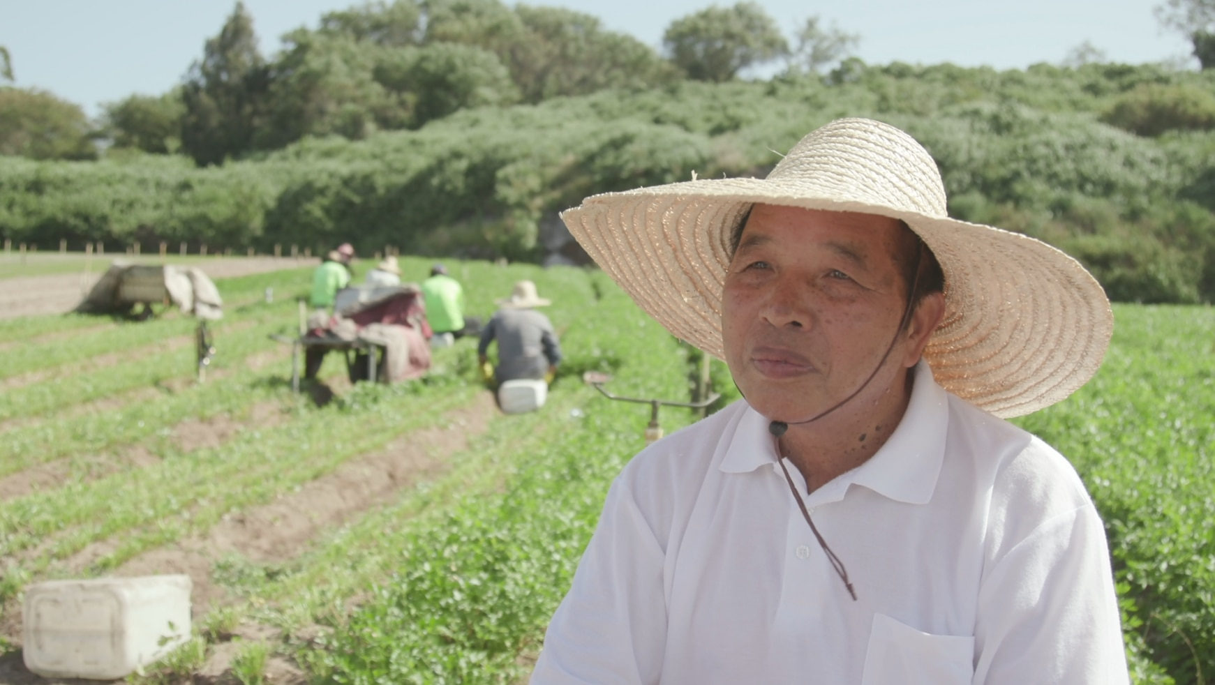 Robert Tang has farmed this land for more than 40 years.