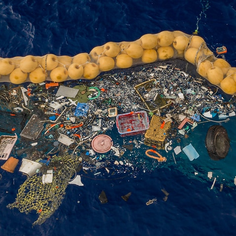 Single-use plastic pollution is seriously impacting the health of Australia's marine environment.