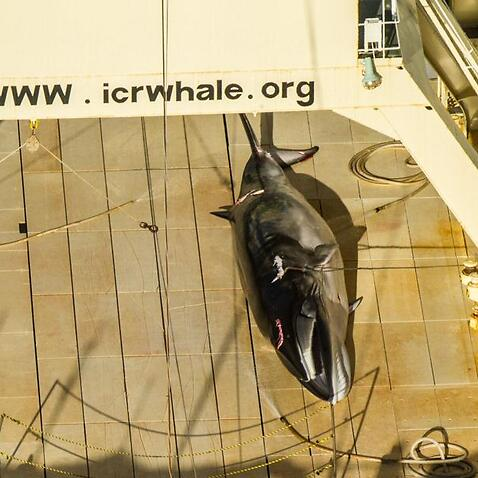 Australia 'disappointed' over Japanese whaling