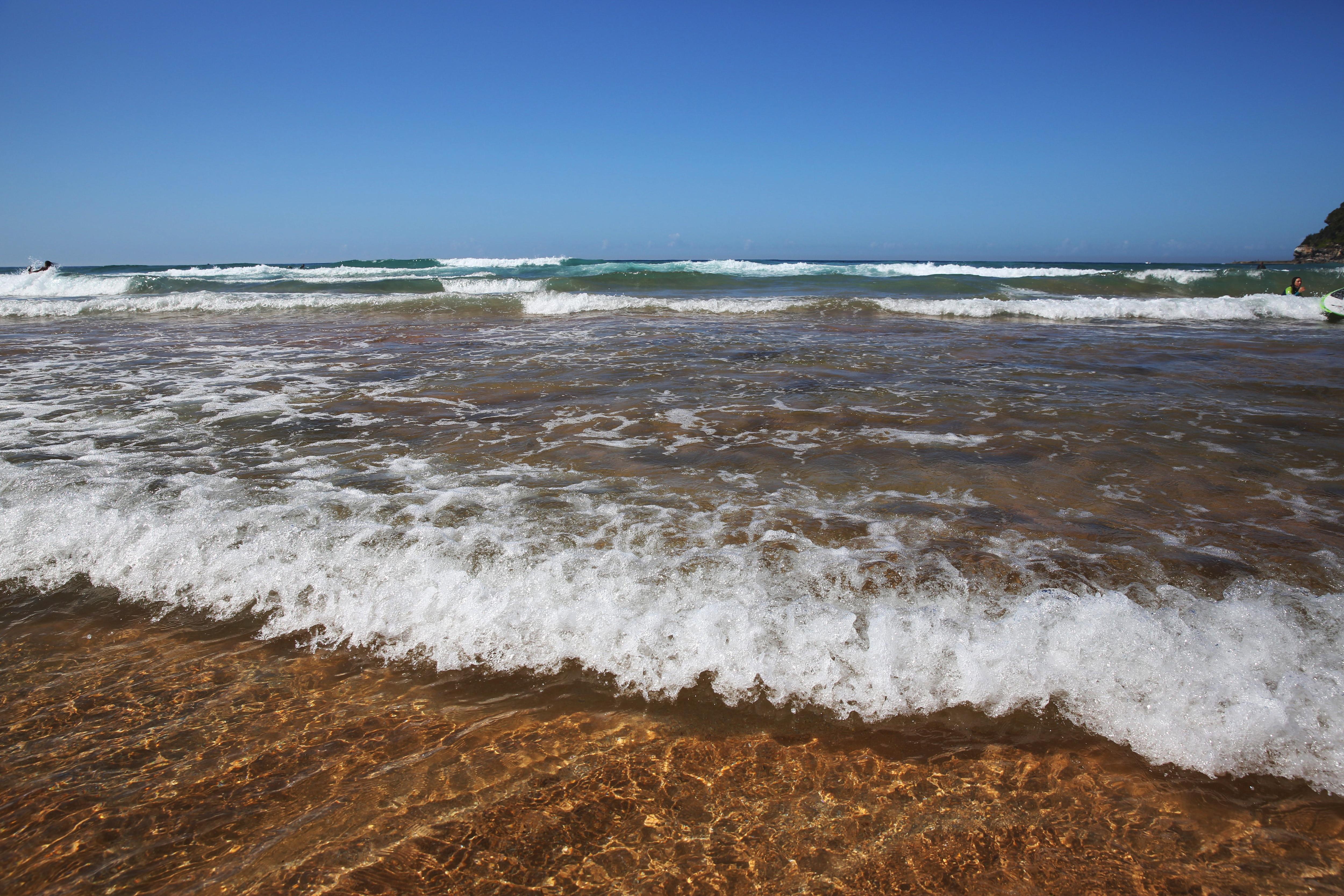 Whale Beach in Sydney