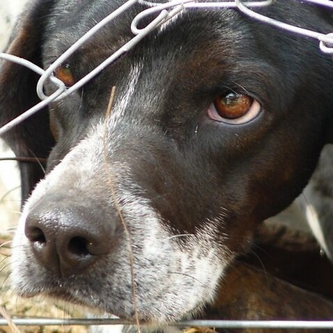 NSW has become the first state in Australia to automatically ban anyone  convicted of serious animal abuse from ever owning or working with animals  again.