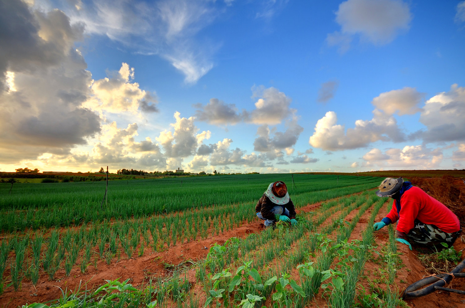 Australia's agricultural sector has been criticised for the way it has treated migrant workers.