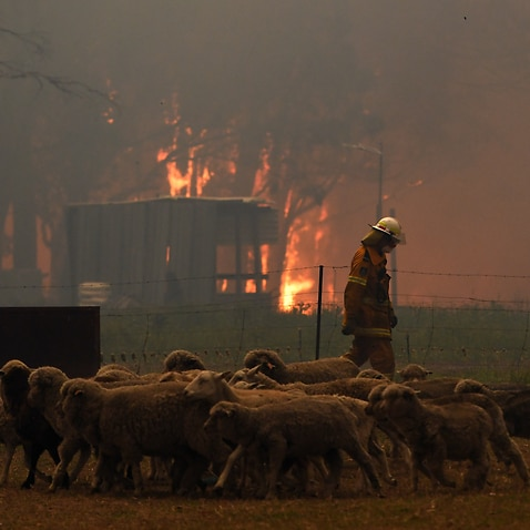 Rural Fire Service (RFS) crews engage in property protection of a number of homes near the town of Tahmoor.