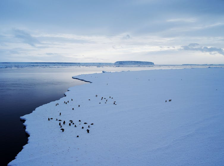Antarctica was long thought to be the sleeping giant of sea level rise, but is now considered a key driver.