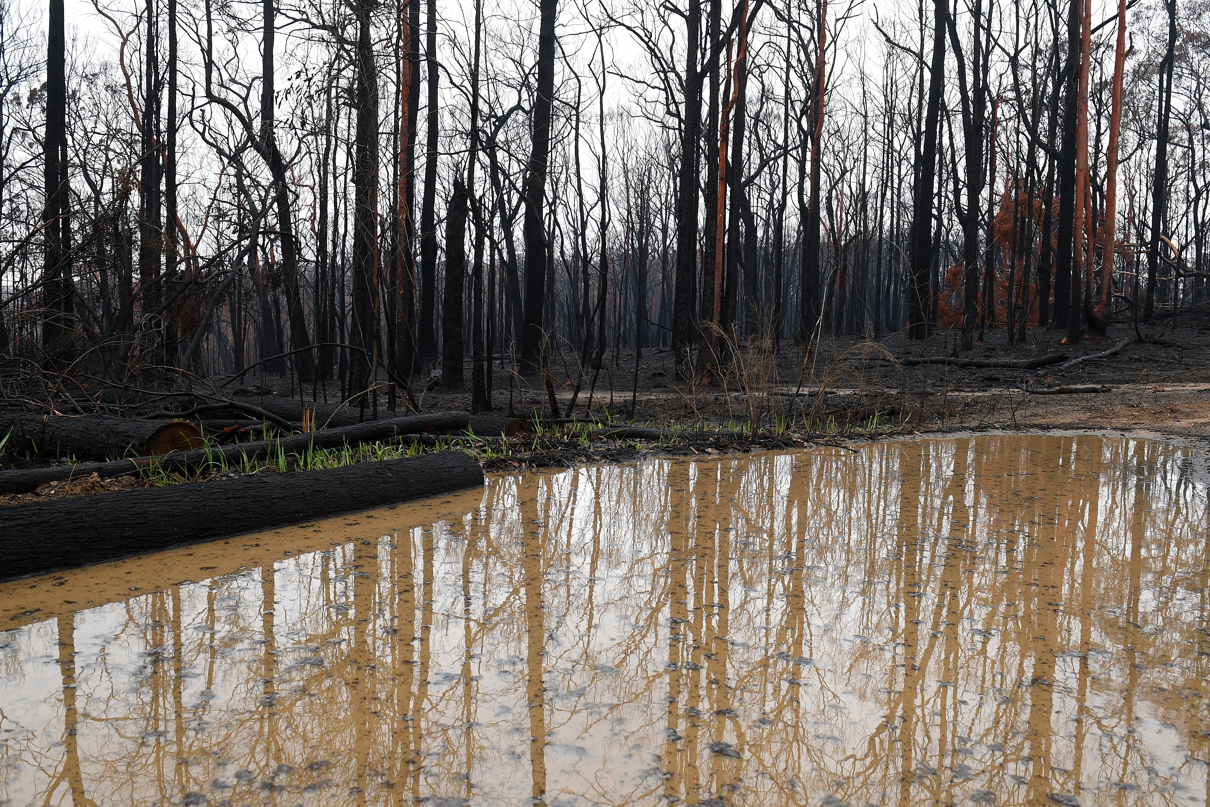 Burnt out bushland near Bilpin, in the Blue Mountains, has received a large amount of rain.