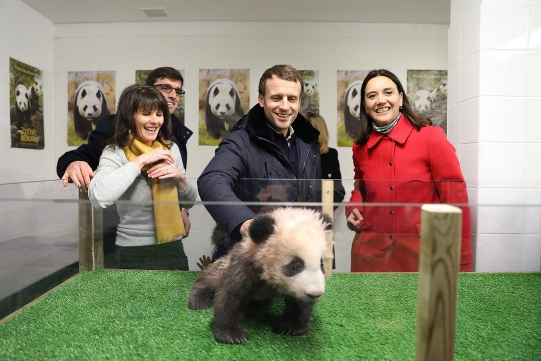 President Emmanuel Macron and wife visit the  Beauval Zoo home to France's first panda cub.