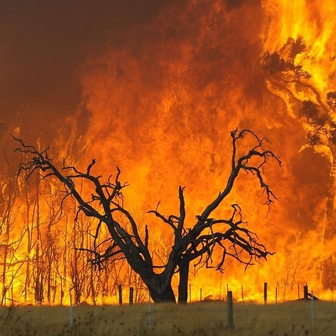 A bushfire burns in the Bunyip State Forest during Black Saturday