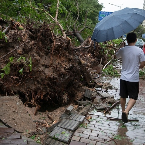 Trees are uprooted by strong wind caused by Typhoon Mangkhut, the 22nd typhoon of the year, on a street in Shenzhen city