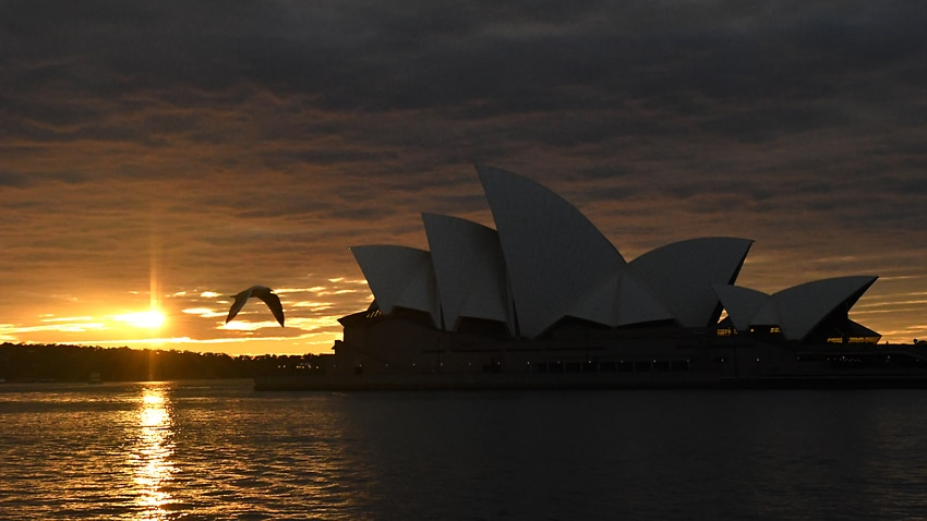 A seagull flies past the Sydney Opera House at dawn in Sydney.