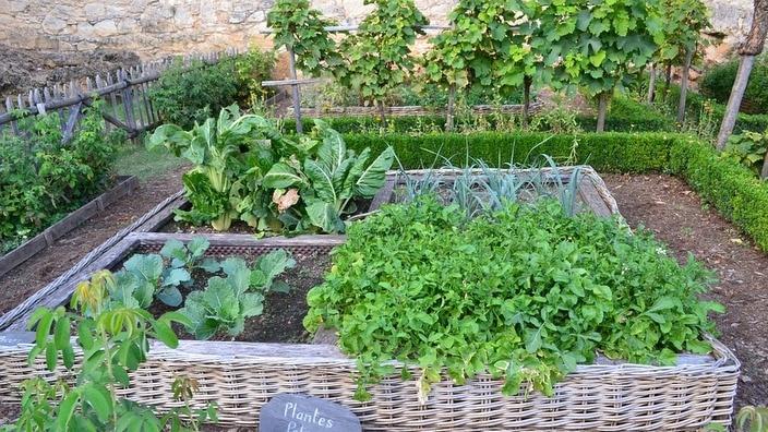 Veggie patch in a backyard
