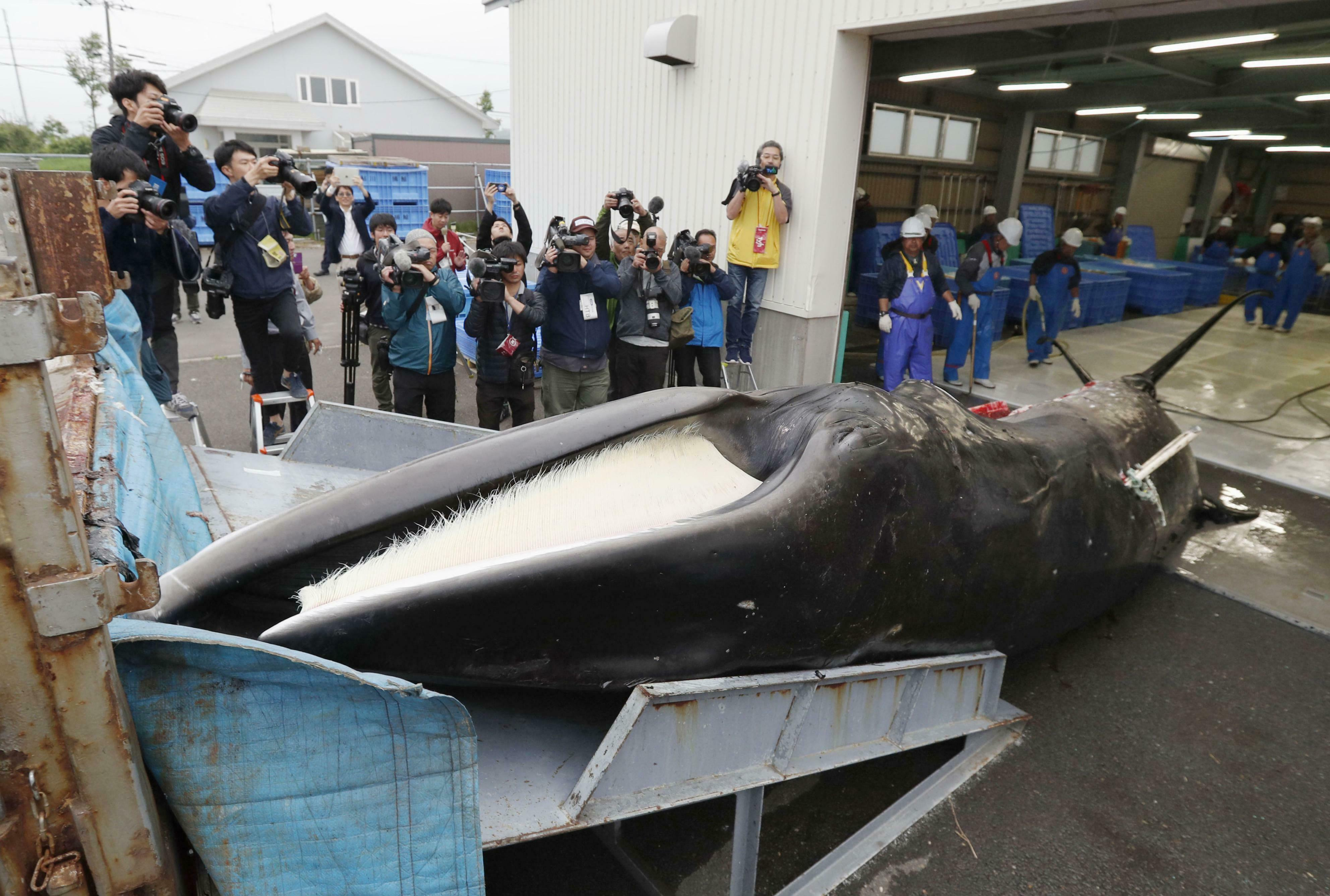 Japanese whalers and government officials hailed the resumption of the hunts, despite global criticism.
