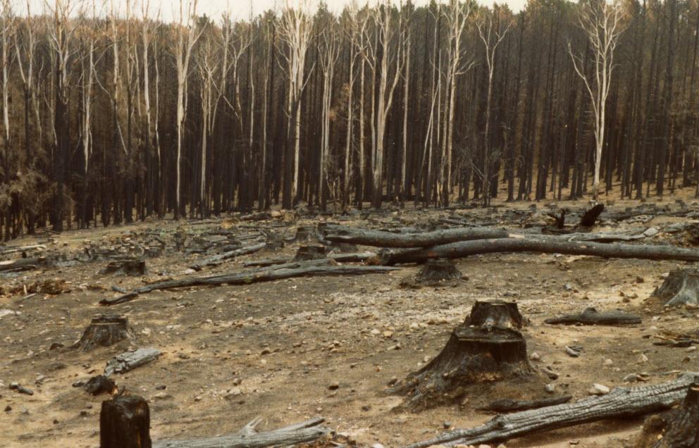 1983 bushfire