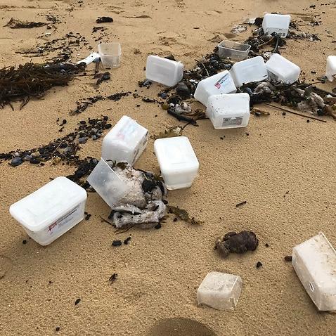 Debris on Malabar Beach in Sydney