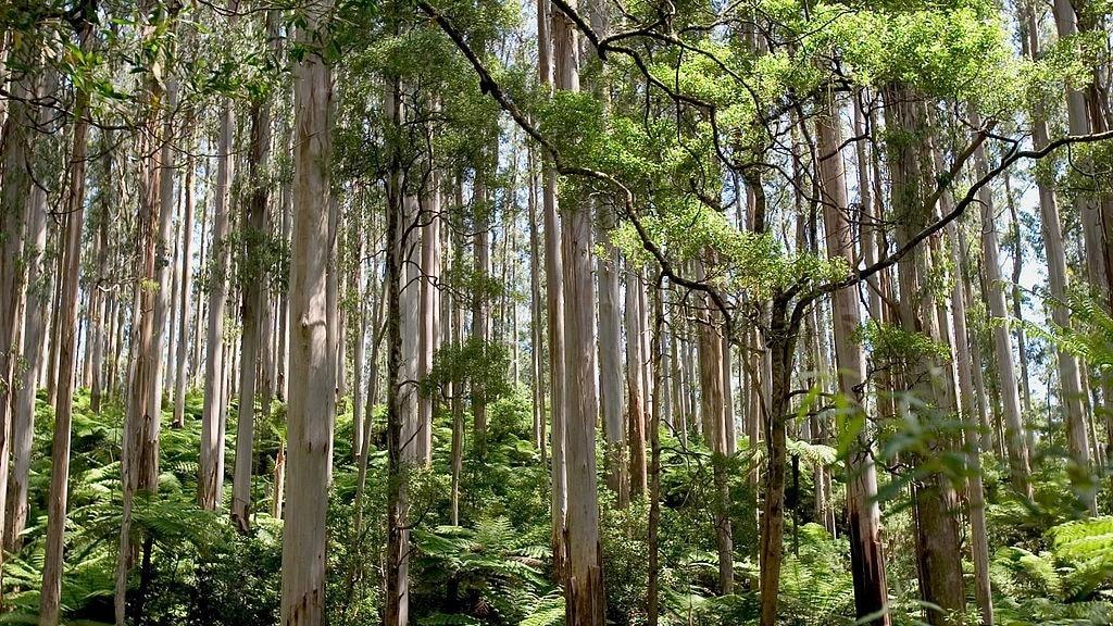 native flora in Australia