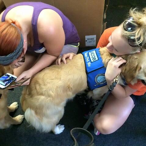 Lutheran Church Charities K-9 Comfort Dogs