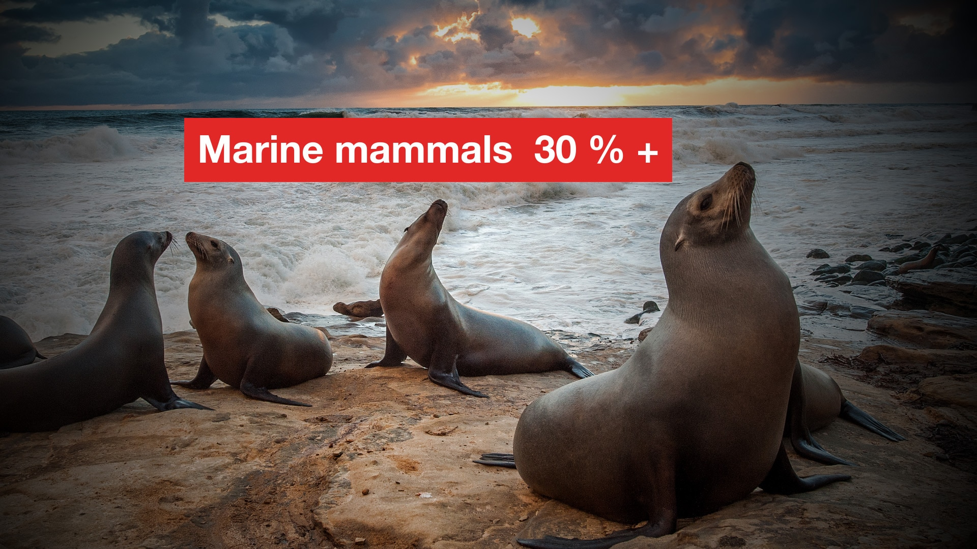 30 per cent of marine mammal are threatened with extinction.