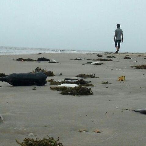 Biển chết cá chết theo sau là người...
