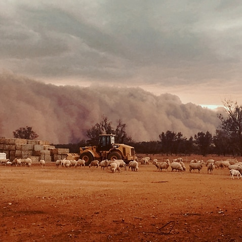 A dust storm sweeping across Western NSW in November