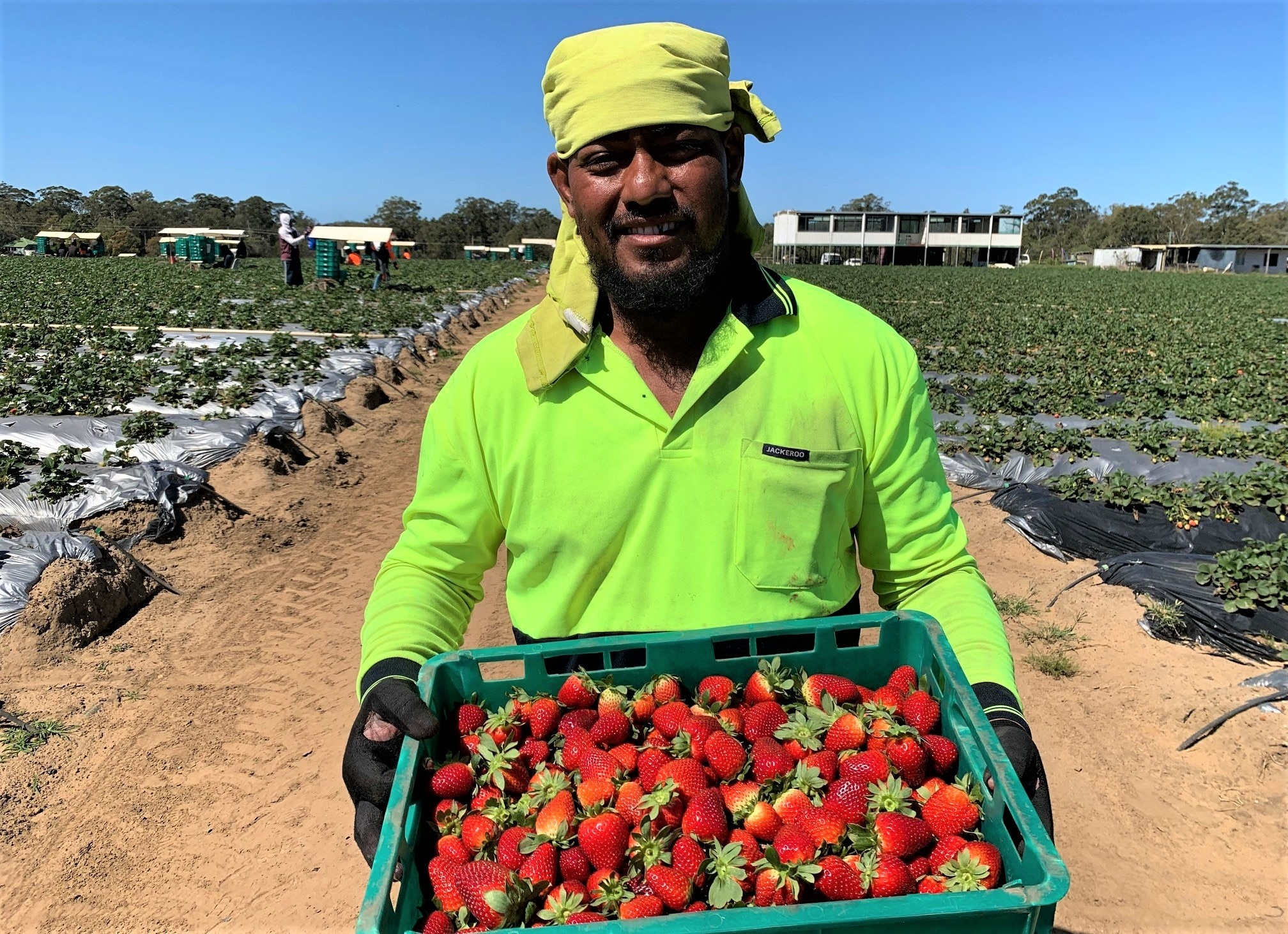 More seasonal workers are urgently needed.