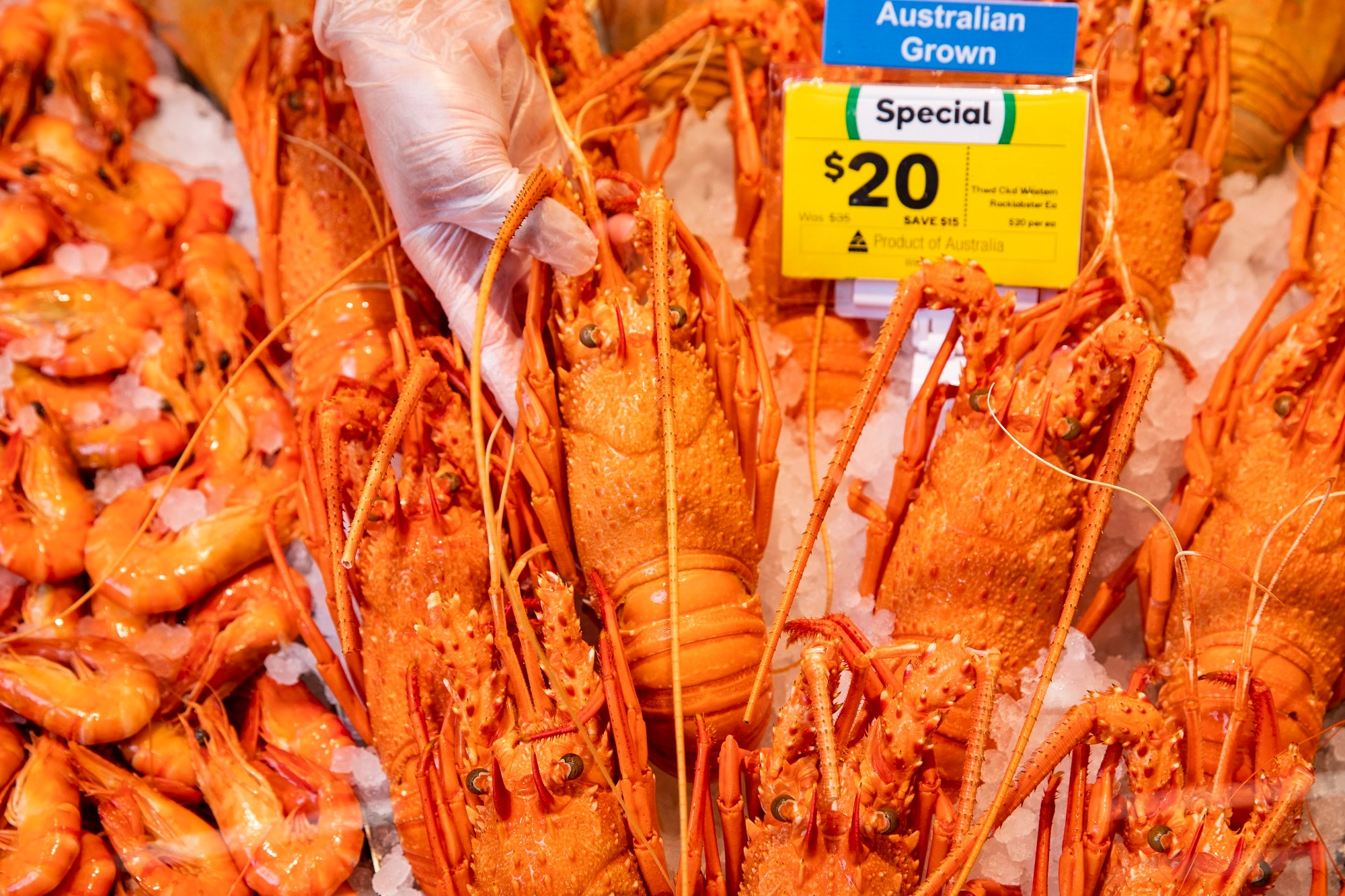 Woolworths. Western Australia Rock Lobsters available for Christmas. 9th December 2020. Photograph Dallas Kilponen/Woolworths