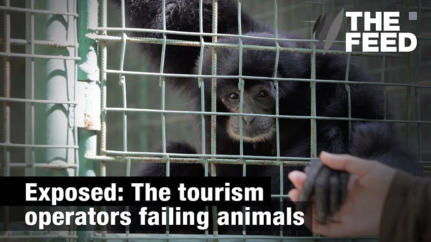 Image for read more article 'Wildlife Tourism: Right or wrong?'