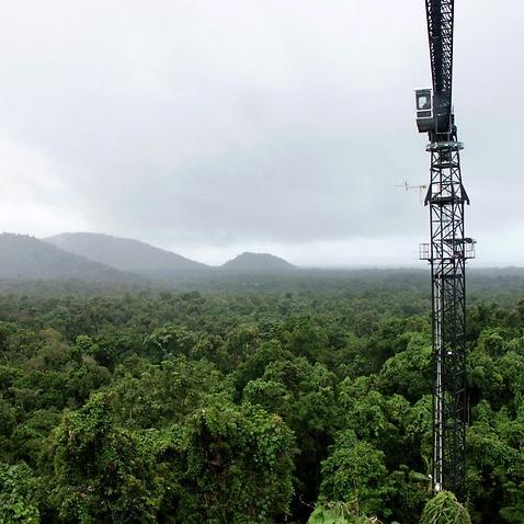 A canopy crane stands above the Daintree rainforest near Cape Tribulation.