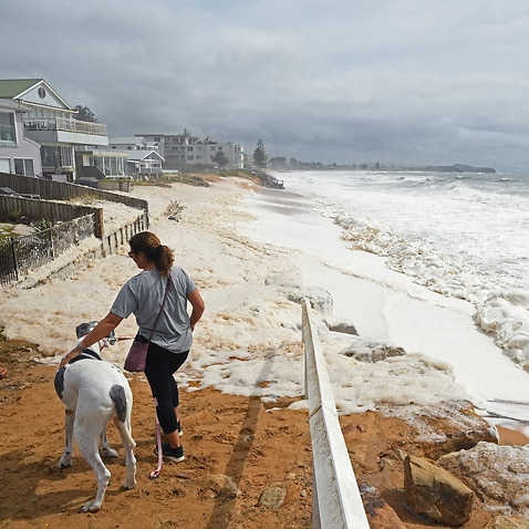 A woman and her dog stare at the sea foam washed up by large waves and heavy rain at Collaroy, in Sydney's Northern Beaches.