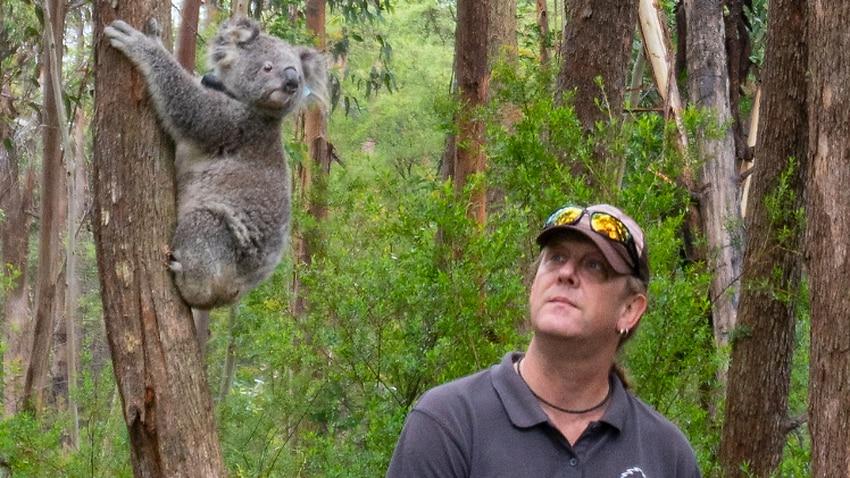 Image for read more article 'Coronavirus measures are impacting the rescue of Australia's injured koalas'