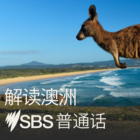 Australia Explained podcast in Mandarin - kangaroo on beach