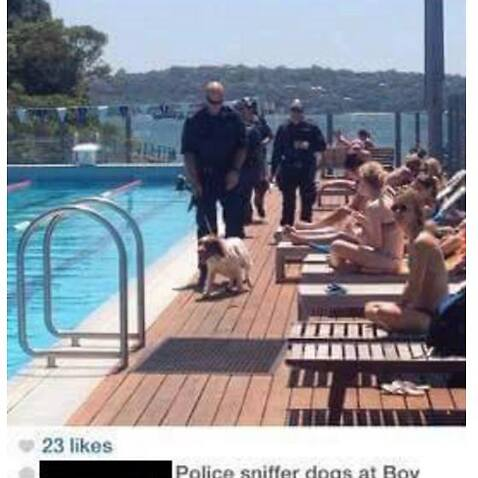 There were police and there was a dog but it had nothing to do with drugs, say NSW Police.