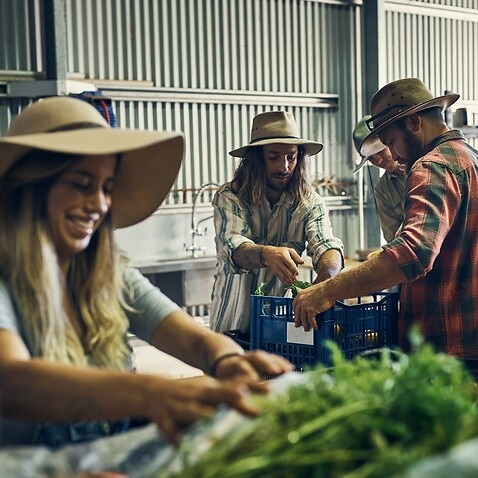 Backpackers working in a farm.