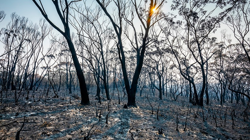 A new report by former defence and security leaders suggests climate change presents a clear and present danger to the world's collective security.