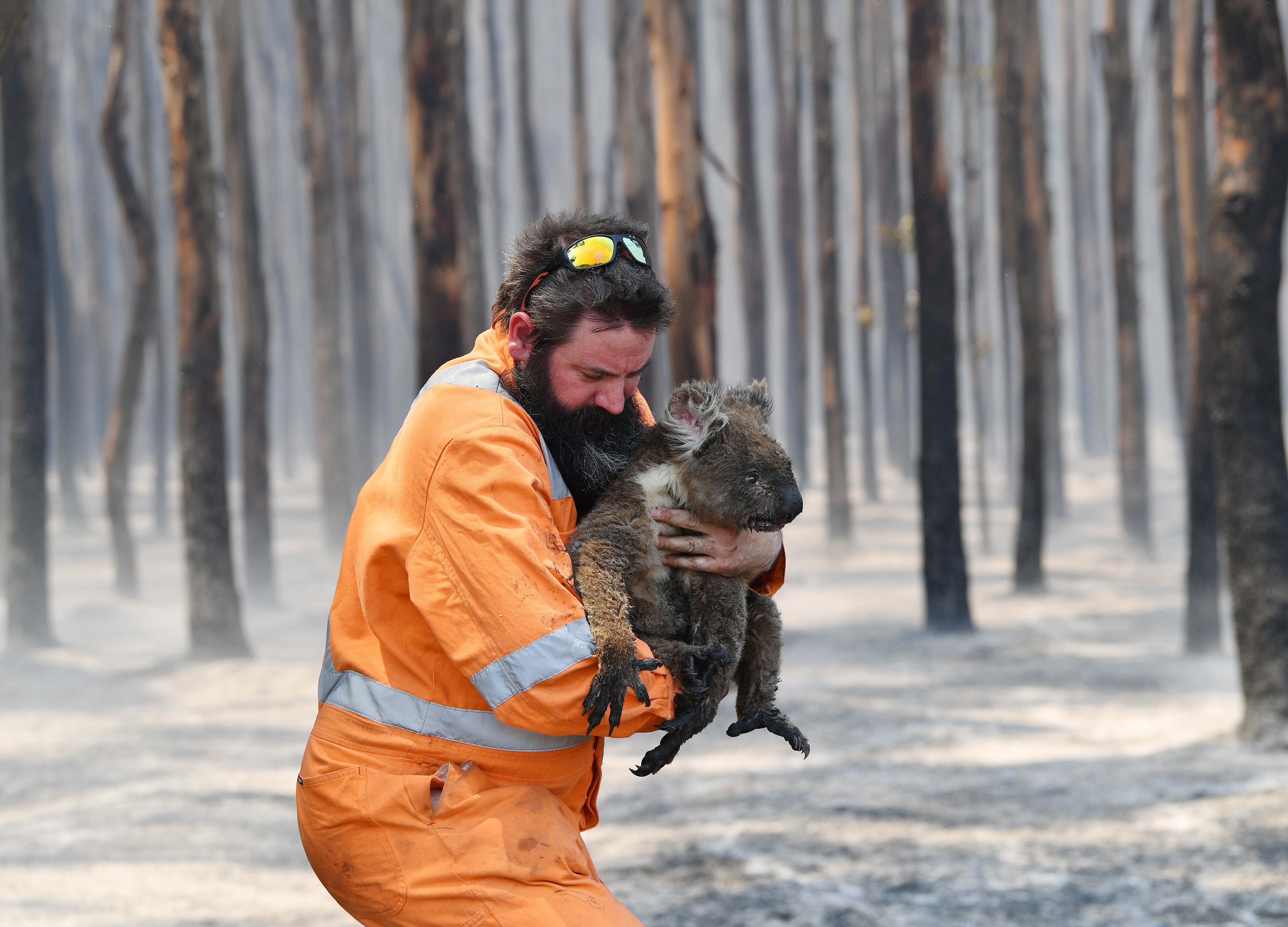Adelaide wildlife rescuer Simon Adamczyk is seen with koala rescued at a burning forest near Cape Borda on Kangaroo Island, southwest of Adelaide, on 7 January.