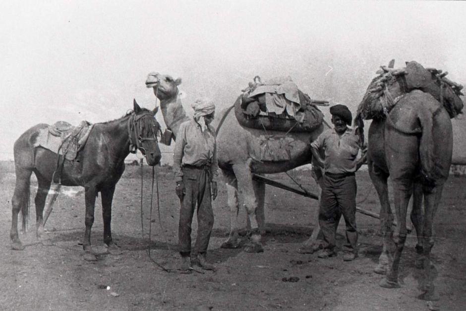 Afghan Cameleers