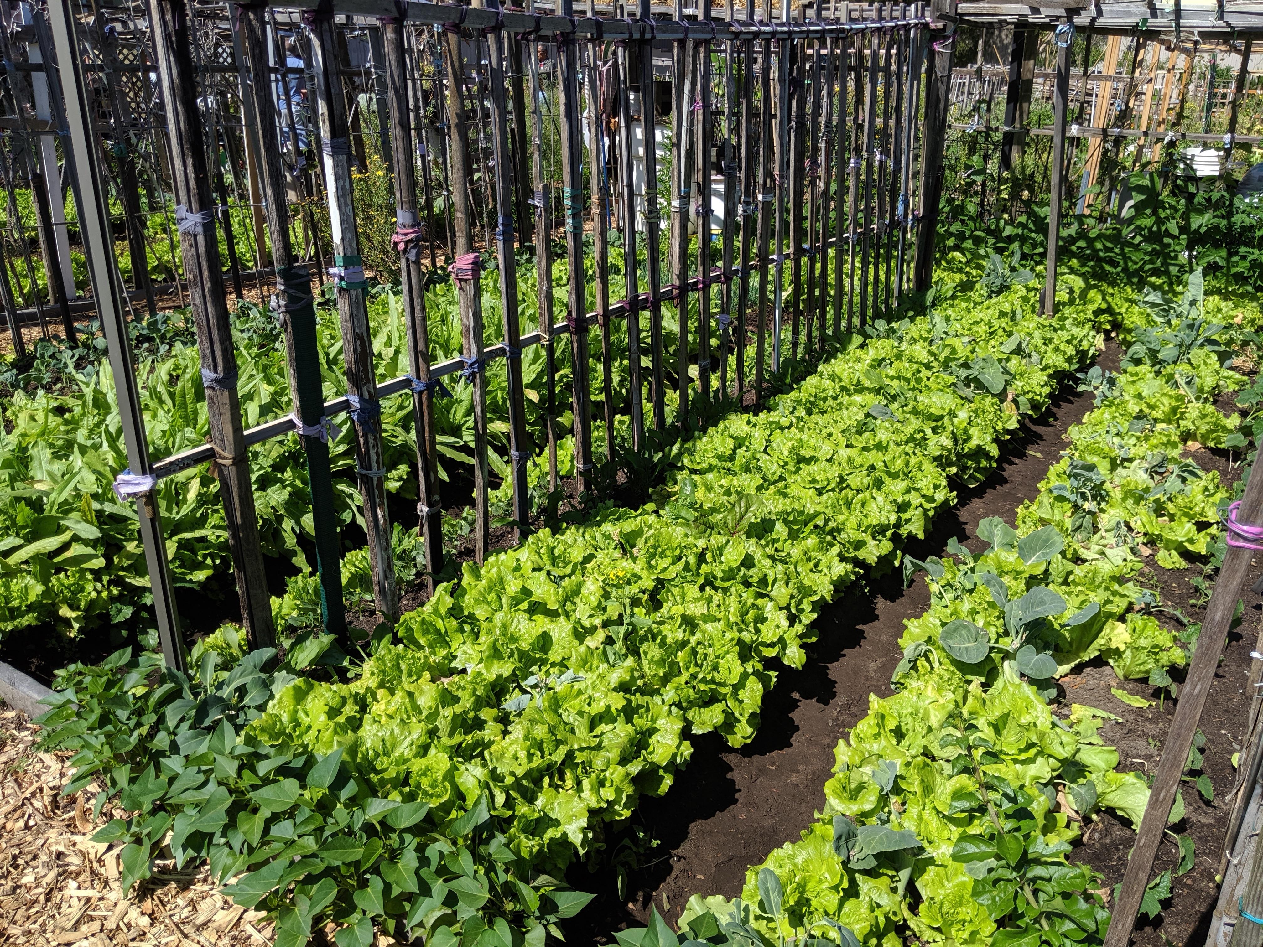 Hurstville Community Garden