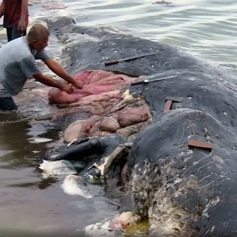 Dead sperm whale found with 6kg of plastic in its stomach