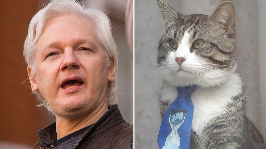 Image for read more article 'Julian Assange told to curb speech, tend to cat'